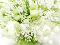 flower31-2_500x375.jpg