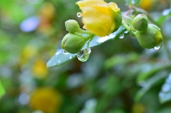 雨の日のお見合いイメージ