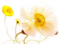 flower32_500x375.jpg