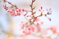 春の婚活イメージ